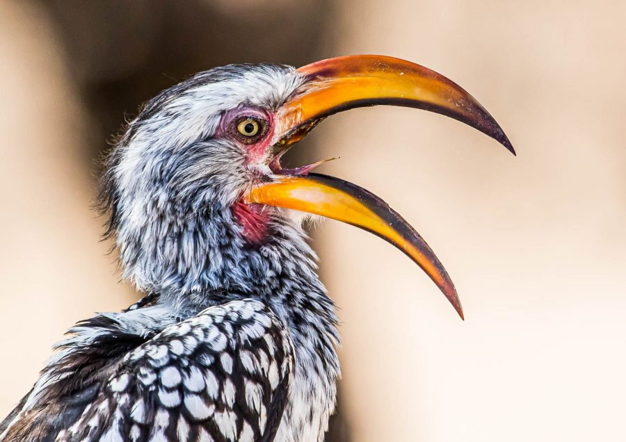 How To Photograph Birds In Africa Nature Ttl