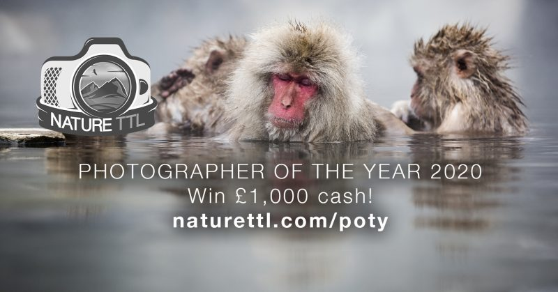 nature ttl photographer of the year competition