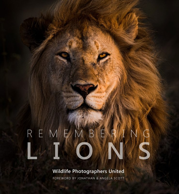 Top Ten Books For Nature Photographers this Christmas: Remembering lions by Margot Raggett