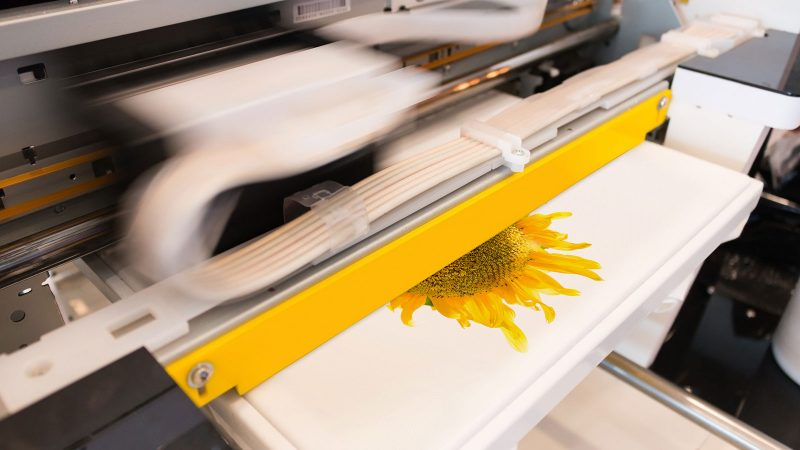 sunflower photo being printed