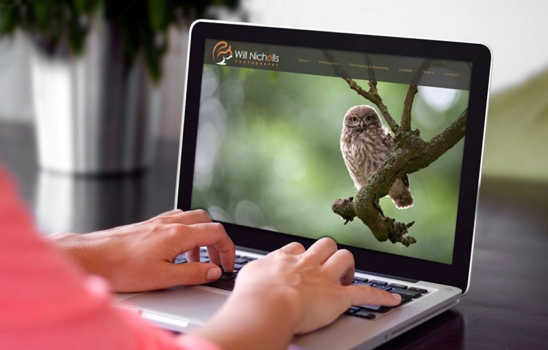 owl photo on a photographers website