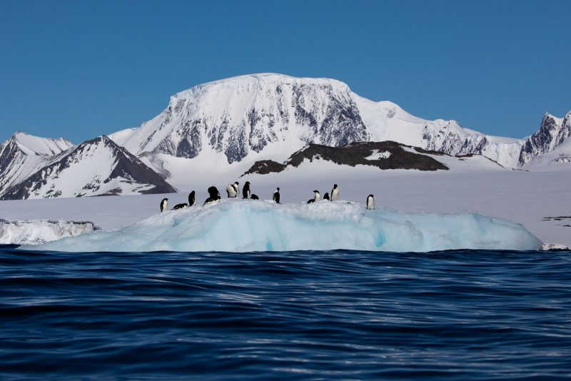 A group of penguins sit on an iceberg with snowy mountains in the background