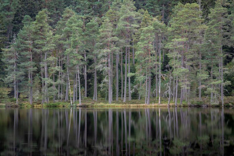 Loch Morlich, Scotland, trees reflected in the lake