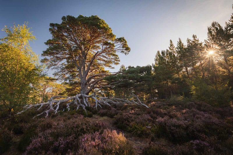 Glenmore forest, Scotland