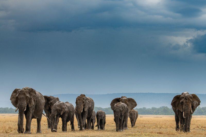 heard of elephants against dark sky