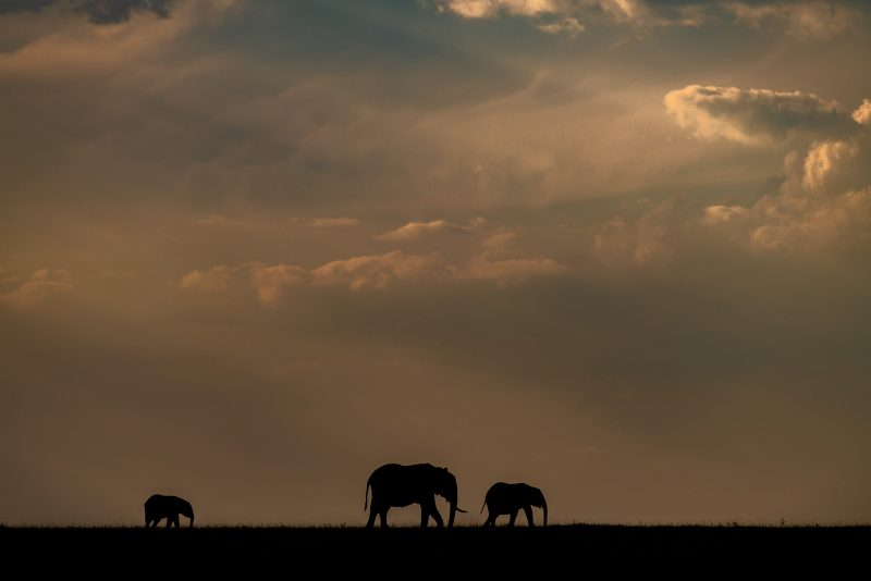 Photograph of 3 elephants silhouetted agains a cloudy sunset sky