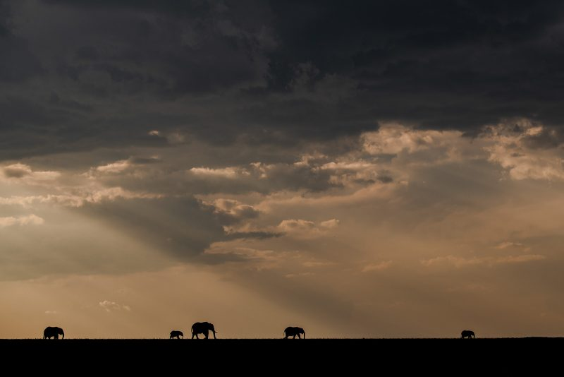 Photograph of 5 elephants silhouetted agains a cloudy sunset sky