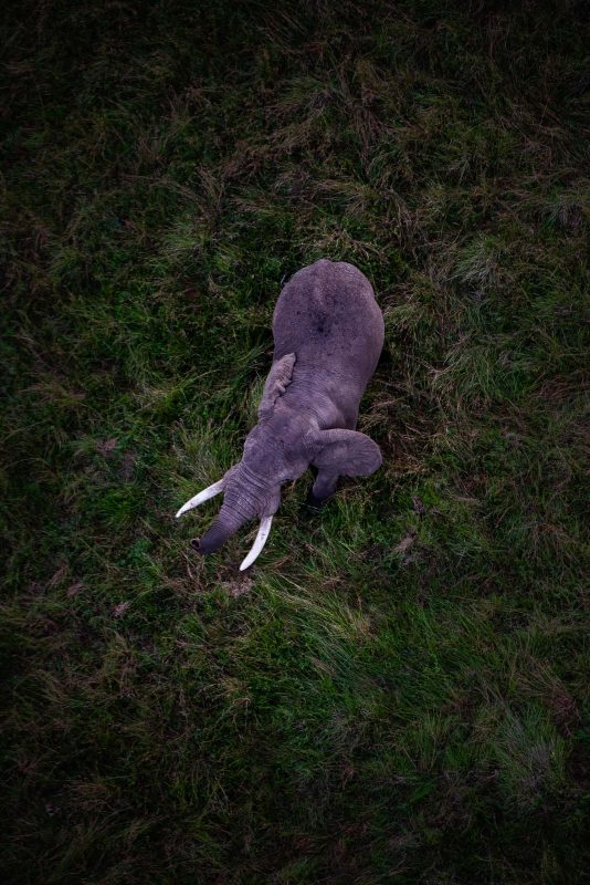 Elephant in grass, photographed from above