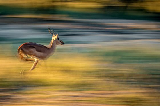 Exposure Tips for Low Light Wildlife Photography