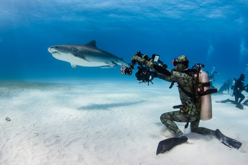 Shark being photographed with strobes