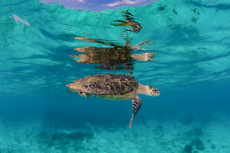 Turtle photographed underwater