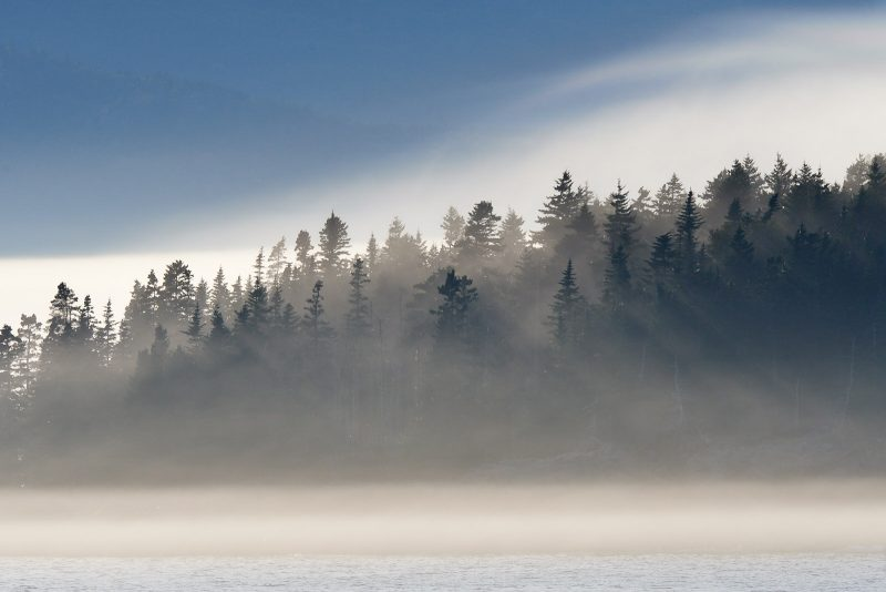 woodland island in fog