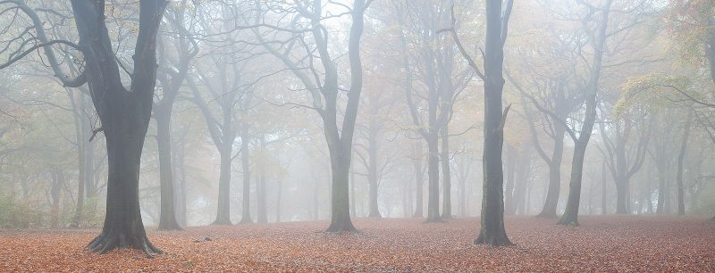 Panorama of a forest with mist and autumn leaves
