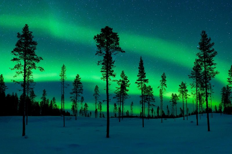 aurora borealis and stars behind trees
