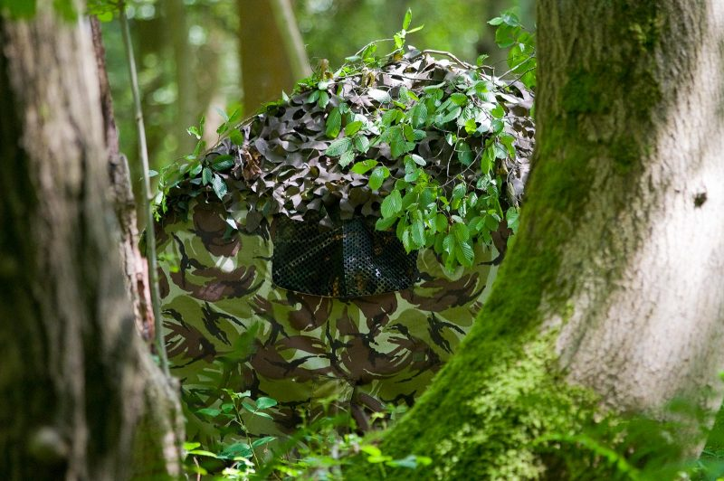 Camouflage woodland hide for wildlife photography