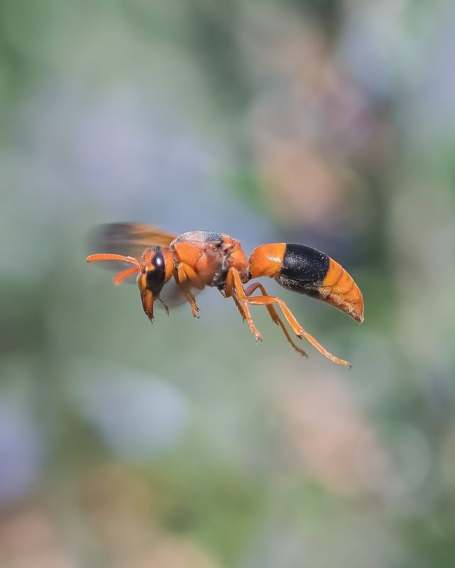 Insect photographed in flight