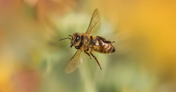 How to Photograph Insects In-flight