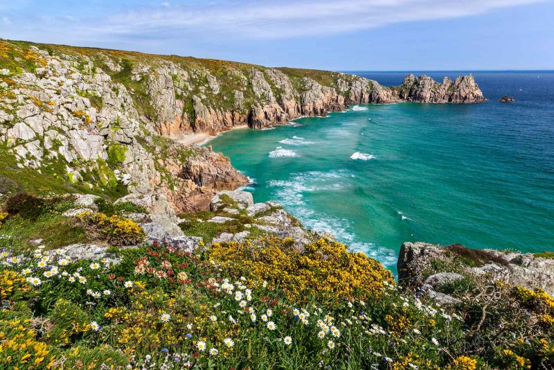Spring and early summer flowers near Porthcurno, in Cornwall