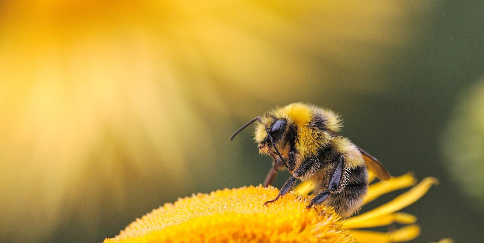 Wildlife and Landscape Photography Tips and Tutorials | Nature TTL