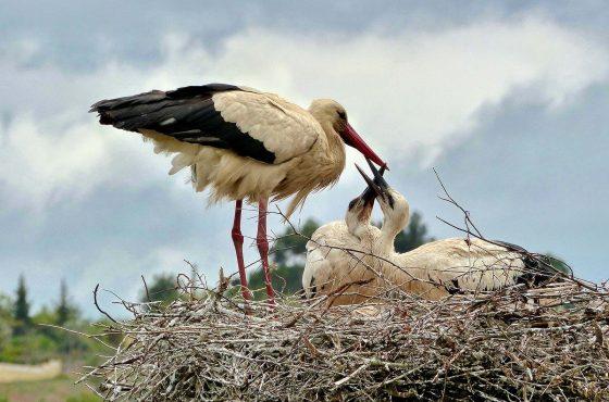 live-wildlife-cameras