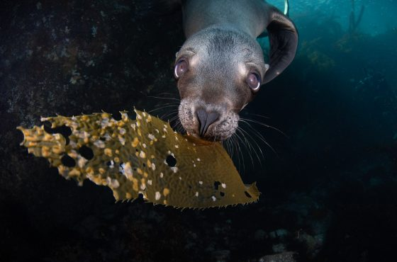 how-to-photograph-sea-lions-10