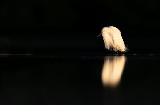 how-to-use-negative-space-in-your-wildlife-photos-17
