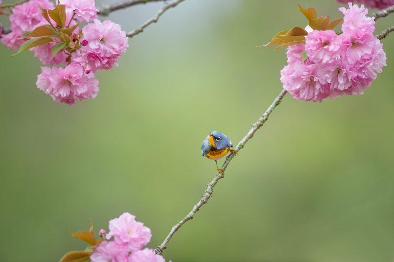 Emphasizing small size birds