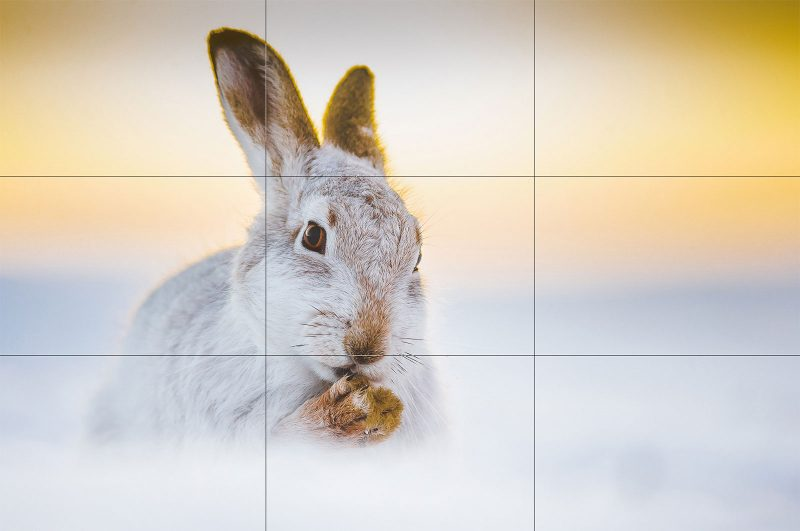 creative wildlife compositions