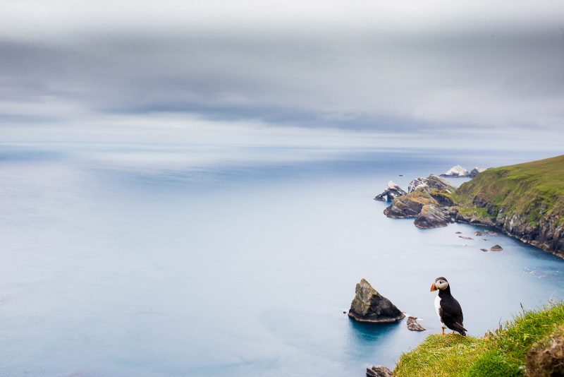 Puffin seascape