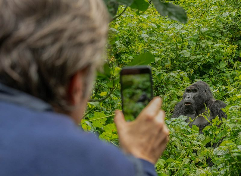 Man photographing a gorilla with his phone