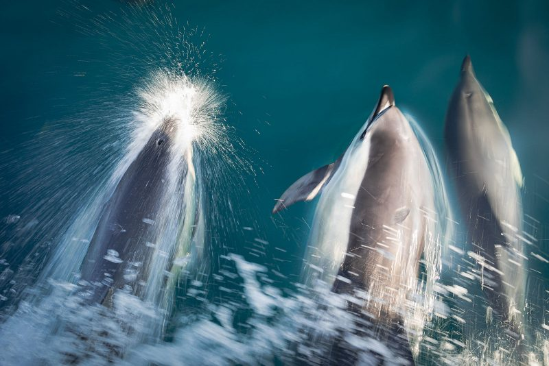 Slow shutterspeed photo of dolphins