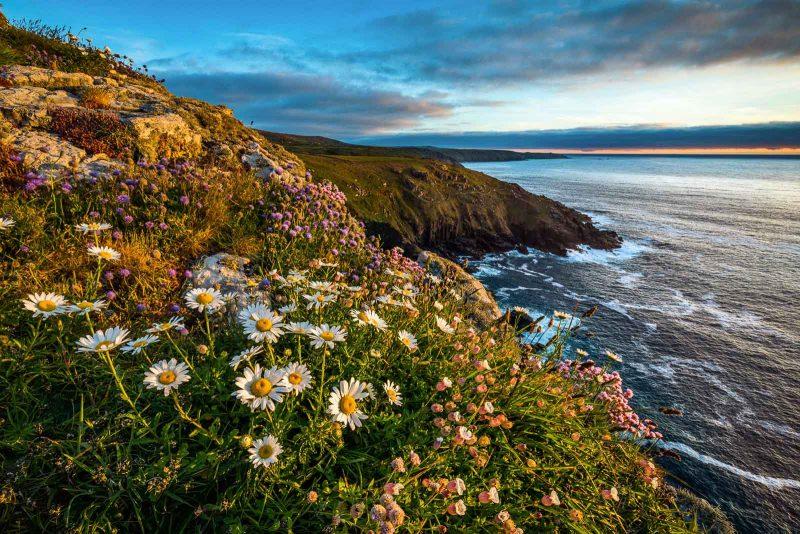 Cornish landscape with flowers