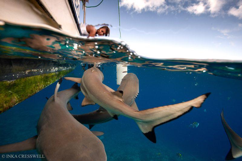 Split shot photo of sharks and boat