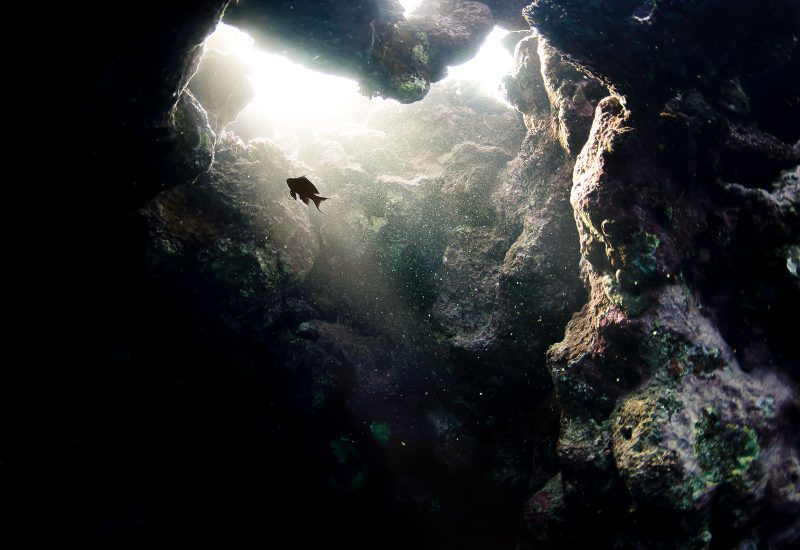 fish in underwater cave