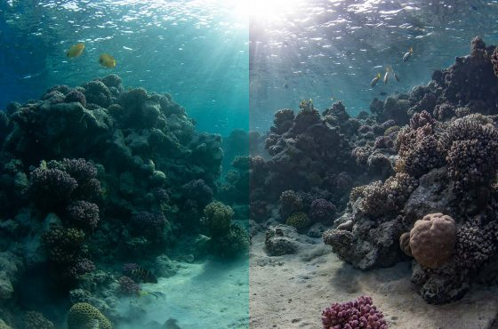 how-to-fix-and-edit-underwater-photos-12