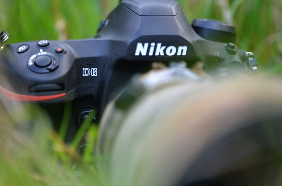 nikon-d6-review-wildlife-photography