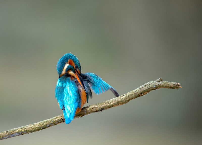 Kingfisher Cleaning