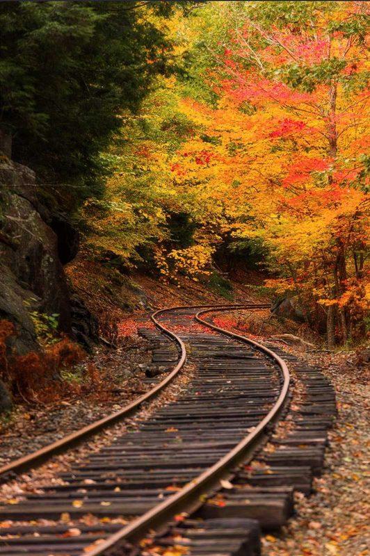 Railway running through fall forest