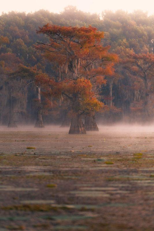 Fall tree landscape location