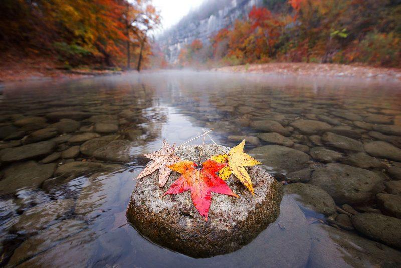 Arkansas fall leaves landscape location