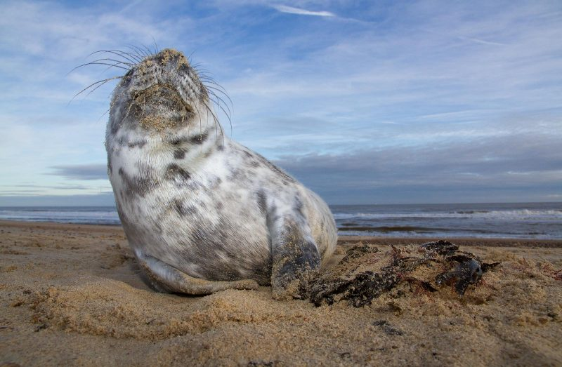 wide angle photo of seal