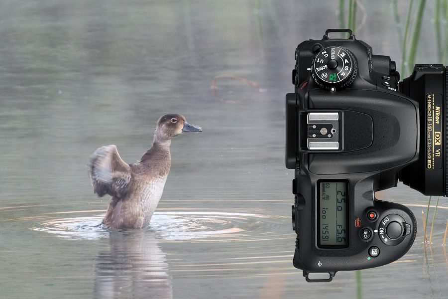 Best wildlife photography camera 2020