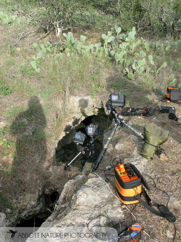 Photo set up for bat photography