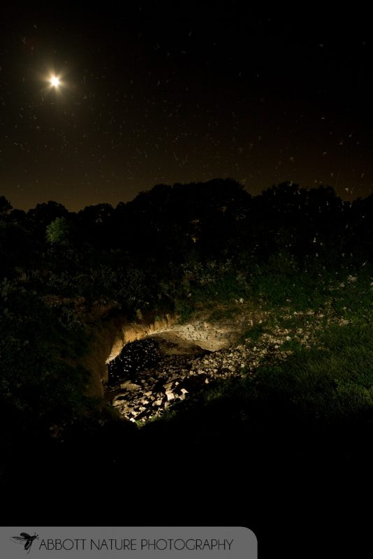 Mexican Free-tailed Bats flying from cave