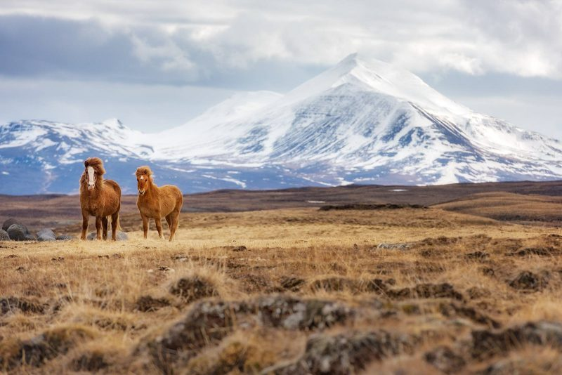 travel photograph of local wild ponies
