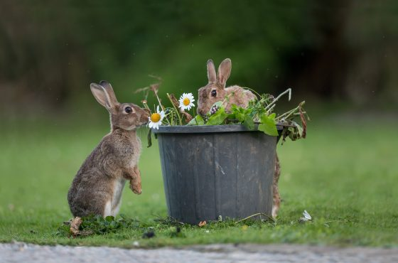 how-to-attract-mammals-to-your-garden-for-photography-15