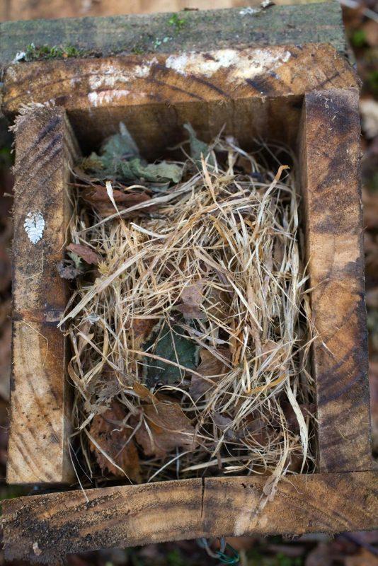 Dormouse nest box