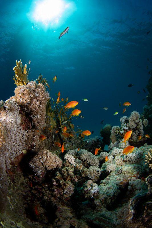 Orange fish in coral reef