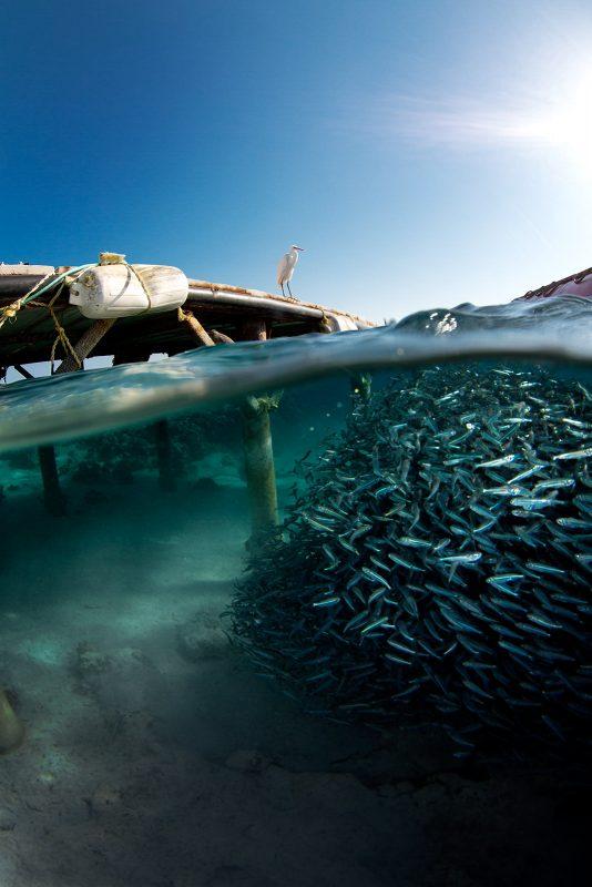 Split shot photo of fish underwater