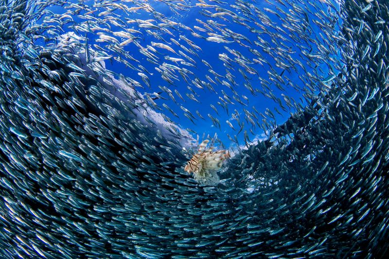 Underwater photograph of a school of fish